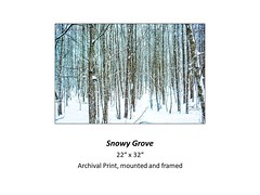 "Snowy Grove • <a style=""font-size:0.8em;"" href=""https://www.flickr.com/photos/124378531@N04/24076440708/"" target=""_blank"">View on Flickr</a>"