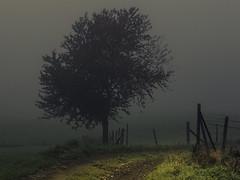In the Morning Mist (Netsrak) Tags: europa europe nebel fog mist baum zaun rheinbach nordrheinwestfalen deutschland de