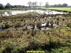 """2017-10-27       Raalte 4e dag     33 Km  (93) • <a style=""""font-size:0.8em;"""" href=""""http://www.flickr.com/photos/118469228@N03/24173315428/"""" target=""""_blank"""">View on Flickr</a>"""
