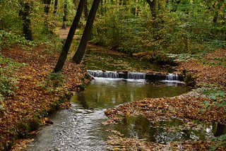 Herbst im Englischen Garten München - Autumn in the English Garden Munich