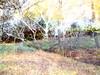 Ardinning_Autumn_sub_0005 (troutcolor) Tags: imagemagick subtract autumn ardinning