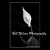fine art prints for teh home or office (billwilsonphoto) Tags: fineartphotographs fineartprints fineartphotography flowers flower