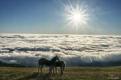 VIVIR... (Jabi Artaraz) Tags: jabiartaraz jartaraz zb euskoflickr gorbea montaña vivir amanecer