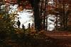 Buena Vista (gripspix (OFF)) Tags: 20171021 autumn herbst fall aussichtspunkt vista forest wald buchenwald alb schwäbischealb swabianalb atmosphere stimmung
