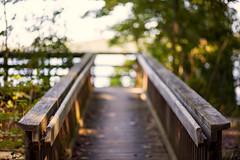 left me dreaming (Satirenoir) Tags: virginia summer masonneckstatepark masonneck park forest hike hiking path bridge light bokeh