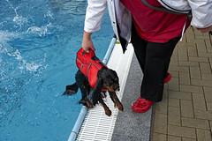 Wet Handbag (Monty May (OBSERVE)) Tags: iserlohn germany street streetphotography dogs humour