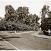 May 1942 - Entrance to magnificent stands of trees in the French Gardens, Ismailia, Egypt - real photo card - circa 1930s