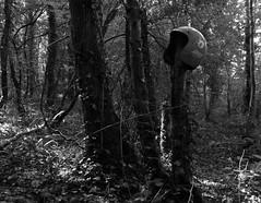 """""""Rencontre D'Un Autre Type..."""" (The Blue Water Lily's Company) Tags: fdrouet nb bw monochrome monochrom forêt forest etrange strange fuji"""