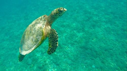 Snorkel adventure following the sea turtles 🐢  The Gilis (Trawangan, Meno and Air). Lombok. Indonesia  Sept 2017 #itravelanddance