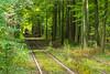 October2017 (raphael.dropsy) Tags: nature nikon park autumn forest people seasons tree tervuren brussels belgium