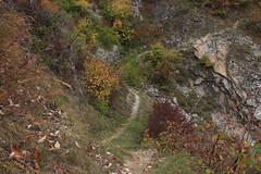 petit sentier (bulbocode909) Tags: valais suisse montagnes nature automne sentiers vert jaune rouge forêts arbres