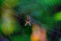 This Space Taken. (Omygodtom) Tags: contrast winter web spider insect bokeh bug existinglight elitebugs colorful composition colours leica nikkor nature nikon dof d7100 country trail park path nikon70300mmvrlens vr