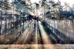 Sunrays! (radimersky) Tags: sunrays promieniesłoneczne mgiełka mist słońce podsłońce thirds autumn fall jesień podzim autumnal morning poranek direct dmclx100 lx100 panasonic micro 43 four polska europa europe lumix sun light directsunlight drzewa trees woods niwki templehof poland fourthirds grass tree forest landscape krajobraz nature les jesienny silesia śląsk opolskie fog