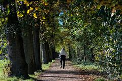 untitled . (helmet13) Tags: d800e raw people man autumn fall alley walk sunshine aoi peaceaward