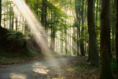 Magical Moments.. (Mini-UE || Mini-Photography) Tags: fog forest foggy myst mysterious light beams photography mini klaas michel nicolaes woods morning walks atmosphere