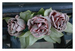 Flowers on the grave... (JM THE BURT) Tags: saintpaulchapelcemetery manathan spleen mélancolie tristesse roses grave cimetery newyorkcity cimetière tombe fleurs flowers usa sadness respect rip