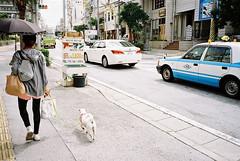 (埃德溫 ourutopia) Tags: film kodak colorplus kodakcolorplus200 kodak200 yashica t2 t3 t4 t5 filmphotography analog analogphotography sidewalk pavement road roadside car dog puppy girl street naha okinawa 那覇 沖縄 フィルム