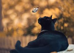 Panther (Ro Cafe) Tags: cat garden autumn fantasy animal nikkormicro105f28 nikond600