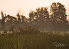 Foggy morning (Sergey Timokhin) Tags: beauty collor morning trees foggylandscape fog