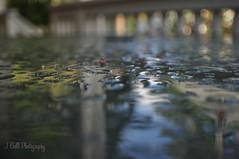Puddles (jessicagull) Tags: bokeh extremebokeh water upclose closeup nikond5000 nikon blurry ratview