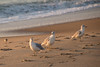 201700904 Bethany sunrise-35.jpg (ashleyrm) Tags: beach delawarebeach bethanybeach towershores ocean waves sunrise travel vacation delaware nature landscape canon canonrebel canonrebelt4i