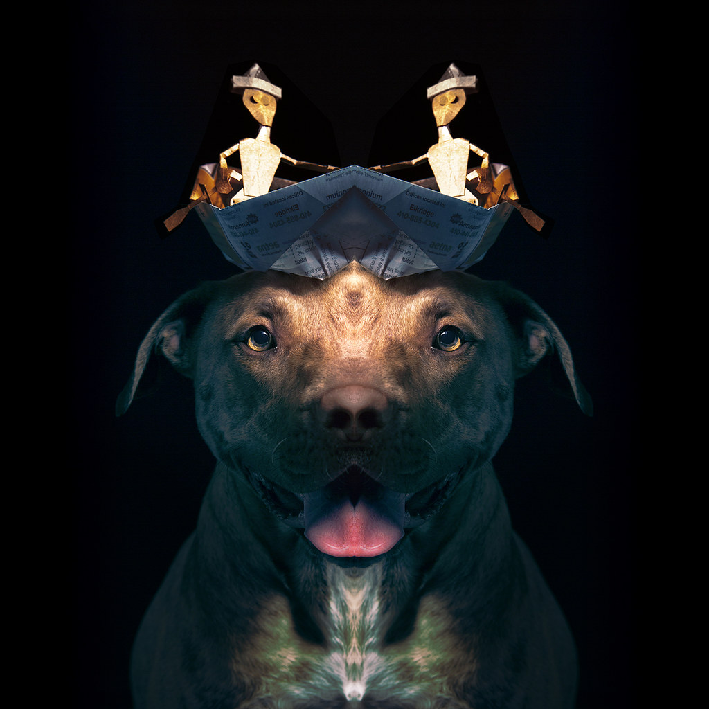pitbull essay papers Standard outline form for the five-paragraph essay home standard outline form for the five-paragraph people who believe that american pit bull terriers.
