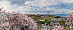 Katsunuma Spring Panorama (Imaraccoon) Tags: efm22mm eosm3 hdr highdynamicrange japan land naturalphenomenon plant spring structuresarchitecture yamanashi air alluring attractive beautiful blue bright brown cherryblossom cherrytree cloud color colorimage copyspace countryside daytime earth environmental farm green hill holiday house landscape landscapephotography life nature outdoors panorama pink pleasing road sakura scenic sky skyblue town travel travelling tree vacation weather wideangle yellow 山梨 日本