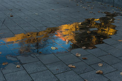 Color Spill (orkomedix) Tags: canon 6d 50mm nifty fifty color water spill pavement ground autumn leaves germany munich
