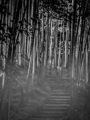In the Realm of Tsukue Ryunosuke (Rekishi no Tabi) Tags: kyōtoshi kyōtofu japan jp kodaiji swordofdoom monochrome sony bamboo