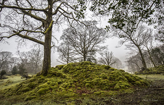 Carpet of moss.
