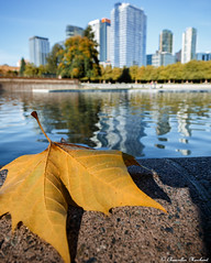 So it Begins :) (Endless Reflection Photography) Tags: bellevuewashington bellevue bellevuefall bellevueautumn autumninbellevue downtownbellevue downtownbellevuepark bellevuedowntownpark leaves autumn seattle seattlefall seattleautumn bellevuecollection lincolnsquareexpansion glyconstruction bellevuehistory whotelbellevue westinbellevue bellevuesquare somatowers one88condos one88bellevue endlessreflectionphotography ereflectionphotos cmerchant1 bellevueholidays bellevuephotographer seattlephotographer twolincolntowers bellevuetowers bellevueskyline bellevuereflection pnw kemperdevelopment
