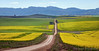 Overberg Canola Road (Panorama Paul) Tags: paulbruinsphotography wwwpaulbruinscoza southafrica westerncape greyton overberg riviersonderendmountains canola yellowflowers longroad nikond800 nikkorlenses nikfilters