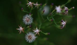 Plants (Macro)