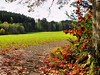 Am Waldrand (almresi1) Tags: autumn fall herbst colours bunt weg way tree baum wald wood forest welzheim landscape