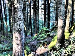Norwegian Wood (chris37111) Tags: norway chris37111 olympus stylus 1 mountfloyen