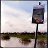 Deichpflege (Ulla M.) Tags: analog hasselblad 6x6 mittelformat canoscan8800f tetenalcolortec selfdeveloped selbstentwickelt lippe hochwasser freihand expiredfilm dorsten umphotoart deich analogue film