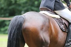 _MG_5820 (dreiwn) Tags: ridingarena reitturnier reiten reitplatz reitverein reitsport ridingclub equestrian showjumping springreiten horse horseback horseriding horseshow pferdesport pferd pony pferde tamronsp70200f28divcusd