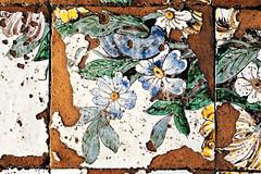 Flores apparuerunt (S. Hemiolia) Tags: ischia zeiss pavimento ceramica maiolica santamariavisitapoveri fiori piastrelle manualfocus 6d forio contax yashica