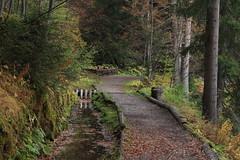 vallon d'Arby (bulbocode909) Tags: valais suisse vallondarby latzoumaz sentiers bisses forêts arbres nature montagnes automne vert