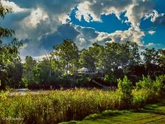 HOUSE ON THE HILL #5 (len.austin) Tags: australia australianplants boatramppark brisbane brisbaneriver house jindalee landscape lateafternoon outdoor queensland