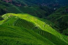 rice terrace - 9