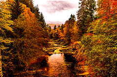 Autumn at River Garry (Half A Century Of Photography) Tags: autumn season scotland highland rivergarry trees pentax