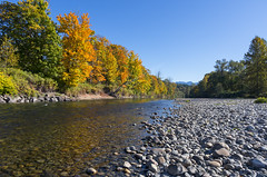 Autumn along the Snoqualmie River (s.d.sea) Tags: washington washingtonstate fall city snoqualmie north bend seattle eastside king county parks pacificnorthwest pacific northwest pnw autumn foliage leaves color colorful river riverbed shore rocks riverrocks water fresh nature outdoors outside sunny sun sunshine blue sky maple trees landscape pentax k5iis 15mm