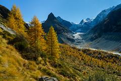 Mélèzes du Val de Ferpècle (Switzerland) (christian.rey) Tags: val ferpècle hérens valais montminé glacier pointedebertol aiguilledelatsa swiss alps aples vvalaisannes montagnes mountains mélèzes automne jaunes sony alpha a7r2 a7rii 1635 switzerland suisse