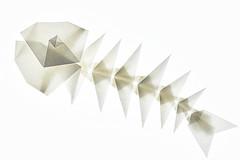 Fish skeleton (Makoto Yamaguchi) (De Rode Olifant) Tags: fishskeleton makotoyamaguchi origami paper paperfolding marjansmeijsters modular origamifish videotutorial
