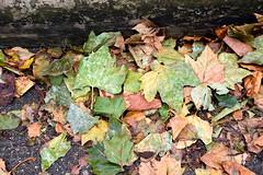 DSC_8286 London Columbia Road Flower Market Autumn Leaves (photographer695) Tags: london columbia road flower market autumn leaves