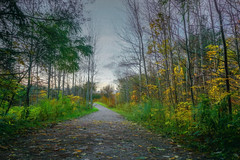 Take Time To Enjoy a Fall Hike in Your Area (JACK TOME) Tags: ontario fall colors york region richmond hill bond lake
