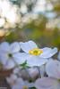 a new addition (Tschissl) Tags: garden garten pflanzen nikkor2824ai flowers vintagelens blumen
