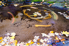 carousel (Plamen Troshev) Tags: water waterfall wild autumn leafs nature new explore yellow beauty amazing abstract alone landscape rodopimountain