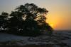 Mysterious lone tree in the desert at sunset, Shajarat-al-Hayat, Bahrain (Andrey Sulitskiy) Tags: bahrain